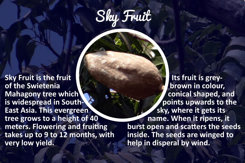 skyfruit_story1.jpg