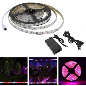 5050 LED Strip light Plant Growing Hydroponic RED BLUE 4:1 Waterproof 12V 1m/2m/3m/5m - intl