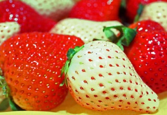 Harga VERY RARE 3X Packs Rare White Strawberry Seeds - FREE SHIPPING
