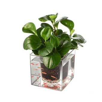 Harga Self Watering Plant Pot Fish Tank Clear Tube Flower Pots - Intl