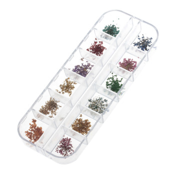 Harga 272055 DIY 12-in-1 Dried Flowers Nail Art (Multicolor)
